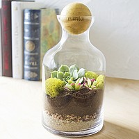 Glass windowsill terrarium with laser engraved rubber wood ball cap